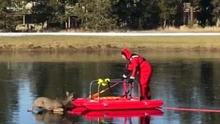 Akcja ratunkowa na lodzie. Strażak uratował jelenia