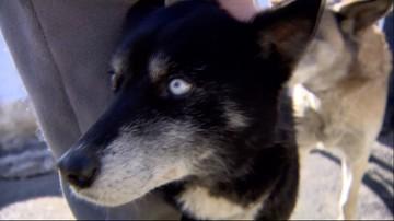 30-01-2017 12:53 90 tys. zł na nowe hospicjum dla psów ze Staruszkowa. Dzięki waszej pomocy