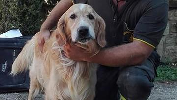 03-09-2016 21:50 Poznajcie Romeo. Psa, który przeżył 10 dni pod gruzami
