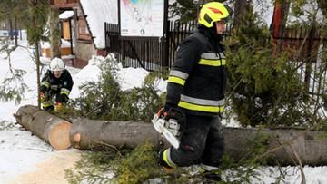 11-12-2017 19:25 Drzewo powalone przez wiatr spadło na samochód. Ucierpiała pięcioosobowa rodzina