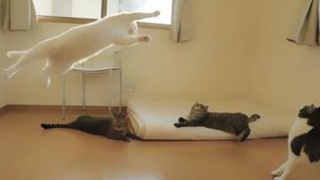 Kot, który jest mistrzem baletu. Oto kolejny dowód, że internet kocha koty