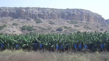 Groźba suszy w Izraelu. Minister rolnictwa: módlcie się o deszcz