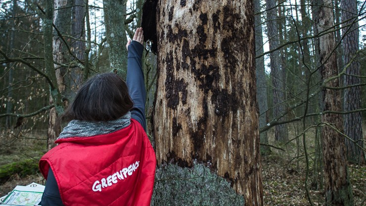 Leśne patrole w Puszczy Białowieskiej. Pilnują czy nie ma wycinki drzew