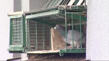 Kleszcze gołębie pokąsały policjantów.