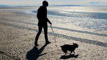18-06-2016 11:46 Włoscy obrońcy praw zwierząt walczą o wstęp psów na plaże