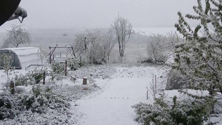 2017-05-09 Śnieżny majowy poranek