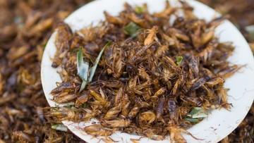 14-08-2017 20:37 Szwajcaria: dania z owadów w ofercie jednego z supermarketów