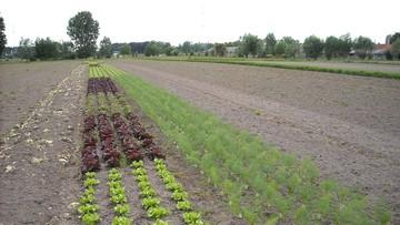 Europosłowie chcą śledztwa w sprawie giganta chemicznego Monsanto