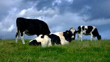 11-05-2016 14:56 Resort rolnictwa pracuje nad przepisami wspierającymi rolników