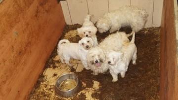 Areszt dla właścicieli zaniedbanej hodowli psów i kotów