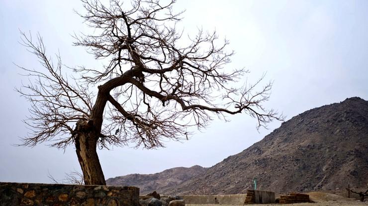 Przywódca talibów: sadźcie drzewa