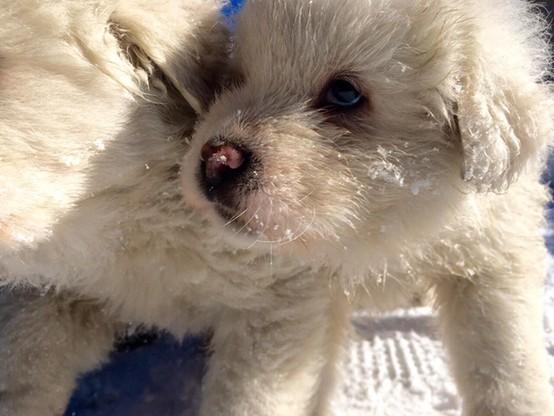 Pieski uratowane z hotelu Rigopiano