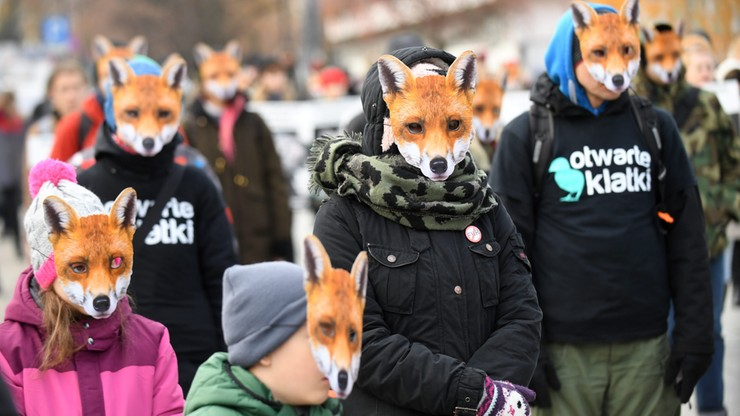 """Lisy"" przed Sejmem"