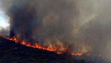 05-09-2016 21:08 Spalone obszary Portugalii to już ponad połowa tegorocznych pogorzelisk w UE