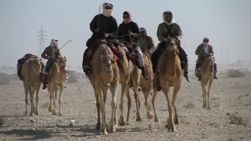 W Arabii Saudyjskiej zamknięto sklep sprzedający napoje z moczu wielbłąda