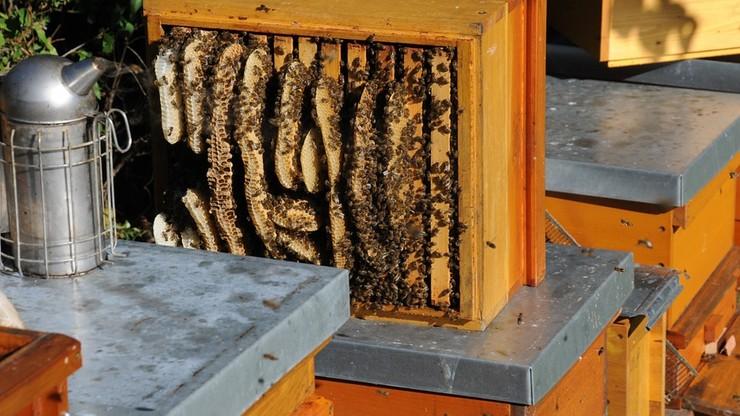 Pszczelarz pogodził się z sąsiadami. Sądowa ugoda