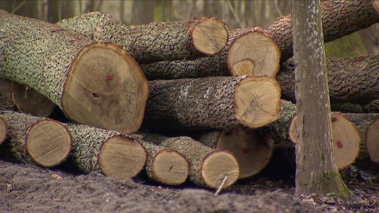 Śmierć podczas wycinki drzew. Mężczyznę przygniótł konar