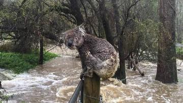 Cyklon Debbie spustoszył Australię. Ucierpieli ludzie i przyroda