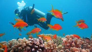 18-04-2017 20:47 Wielka Rafa Koralowa blaknie w szybkim tempie. Naukowcy: to wina nadużywania paliw kopalnych