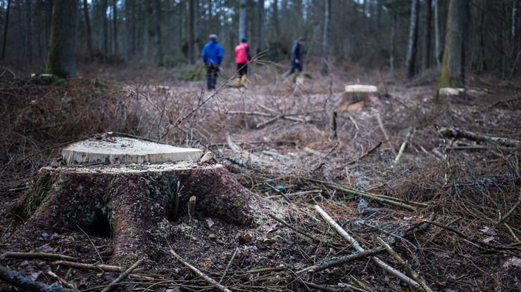 """""""Szyszko przekroczył czerwoną linię"""". Organizacje ekologiczne zapowiadają protesty"""