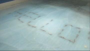 """28-11-2016 20:16 Martwe ryby pod taflą lodu. """"Zamrożony port"""" zamknięty"""