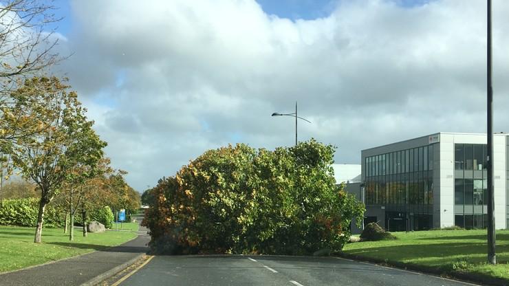2017-10-16 Huragan Ophelia przewraca drzewa w irlandzkim Cork