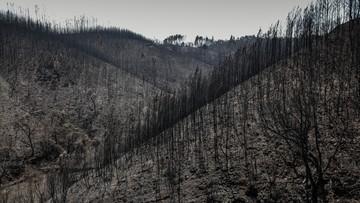Podpalenie prawdopodobną przyczyną tragicznego pożaru w Portugalii