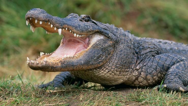 MŚ w wioślarstwie: Polacy nie boją się... aligatorów