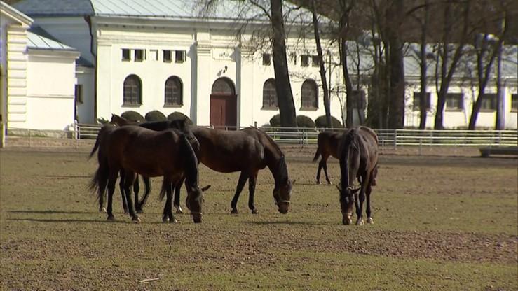 Minister rolnictwa: zarząd stadniny w Janowie do wymiany