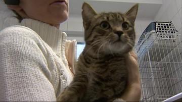 Koty wolno żyjące zjedzą dzięki miastu. Urząd zamówił ponad dwie tony karmy