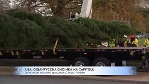 USA: gigantyczna choinka na Kapitolu - 20-metrowe drzewko będą ubierać przez tydzień