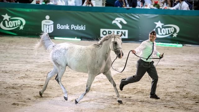 PO: Sposób przeprowadzenia aukcji koni w Janowie powinna zbadać prokuratura