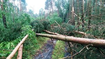 Powalone drzewa po huraganie w Zachodniopomorskiem