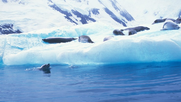 Tak źle jeszcze nie było. Poziom gazów cieplarnianych na Antarktydzie najwyższy od 4 mln lat