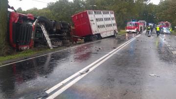 19-09-2017 09:13 Zderzenie z ciężarówką wiozącą świnie. Nie żyją ludzie i zwierzęta