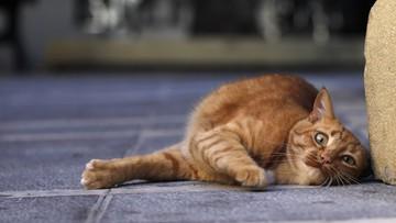 03-02-2016 11:38 260 ton karmy dla 30 tys. bezpańskich kotów w Warszawie