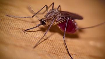 09-09-2017 16:41 Sensacyjne wyniki badań. Wirus Zika w przyszłości może wyleczyć raka