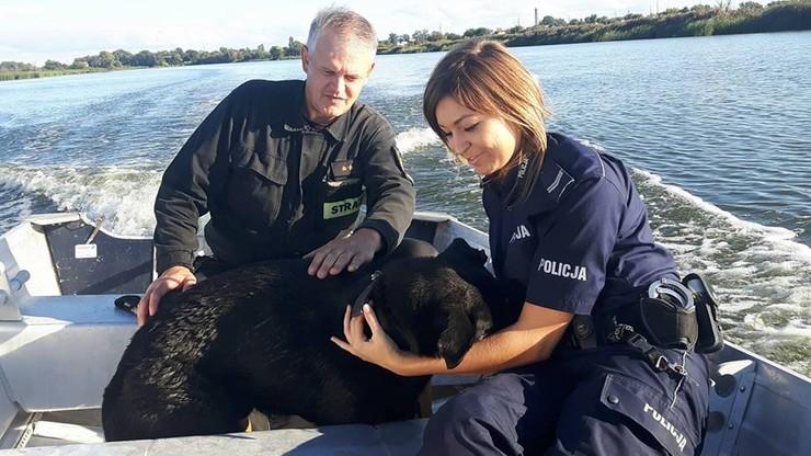 Pies z obciążonym workiem na szyi stał w rzece. Pobite zwierzę odnalazł wędkarz