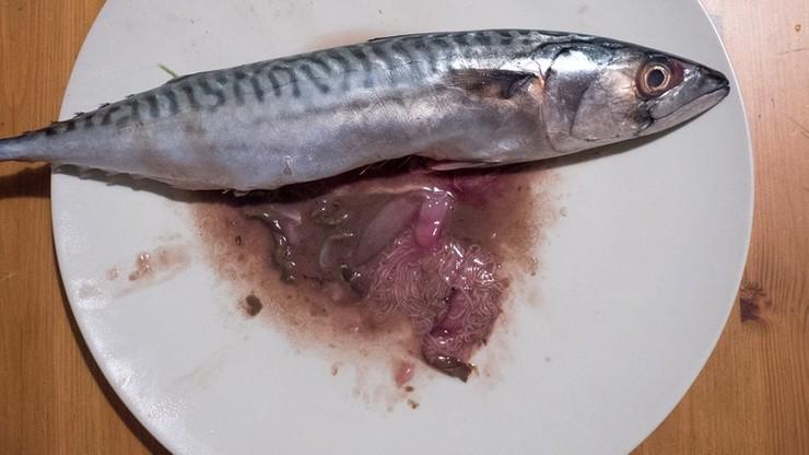 Kupił rybę w hipermarkecie, a w niej - kłębowisko pasożytów
