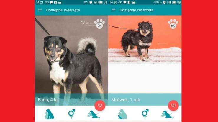 """""""Na4Łapy"""" - aplikacja """"randkowa"""" dla psów ze schroniska"""