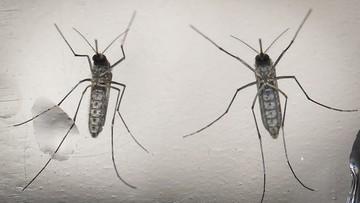 17-02-2016 14:12 WHO wyda 56 mln dolarów na zwalczenie wirusa Zika
