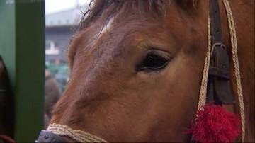 06-03-2017 15:06 Obrońcy praw zwierząt planują wykup koni na targach w Skaryszewie