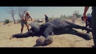 Książę Harry ratuje słonie