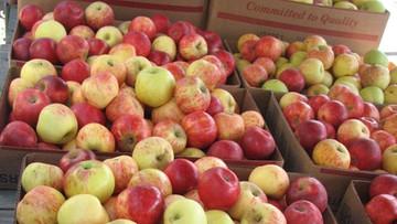 21-01-2016 11:00 Polskie jabłka już niedługo mogą trafić do USA