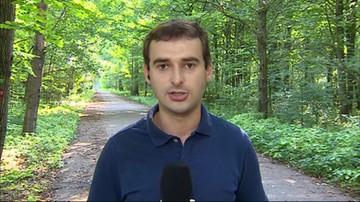 Wycinka w Puszczy Białowieskiej trwa. Mimo zakazu Trybunału Sprawiedliwości