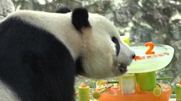 Przyjęcie urodzinowe pandy Tai Shan