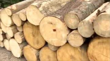 06-10-2015 09:21 Lasy Państwowe tną coraz więcej, ekolodzy krytykują