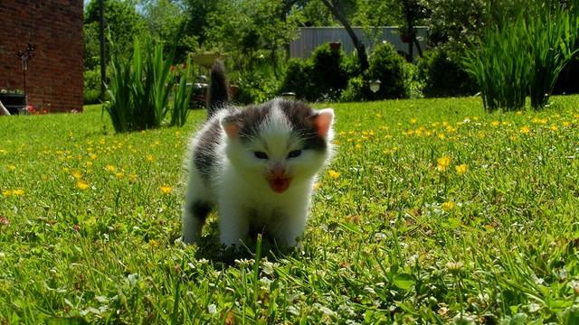 Kot pracownikiem brytyjskiego MSZ - Główny Myszołap w służbie Jej Królewskiej Mości
