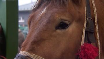 Ruszył największy targ koni w Skaryszewie. Obrońcy praw zwierząt planują wykup koni