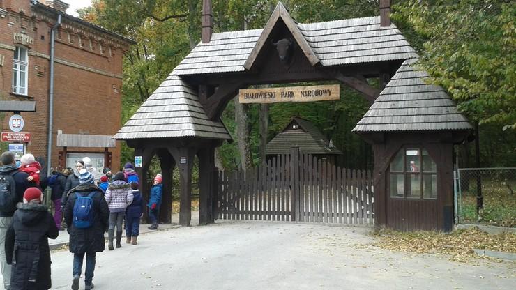 W Białowieży weekend był mroźny, ale turyści dopisali